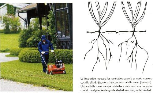 Cuidados de jardines c sped el corte todohusqvarna - Cortar hierba alta ...