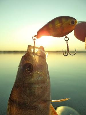 Изображение 1 : Кубенский подарок. Вологодская область, Кубенское озеро, дер.Пески, 18.07.2015.