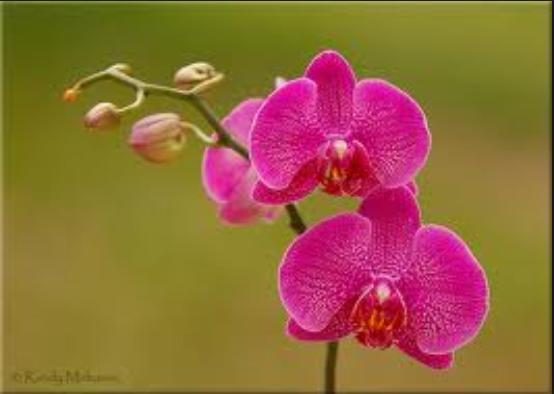 Aneka Gambar Bunga Mawar Yang Spesial | Pernik Dunia