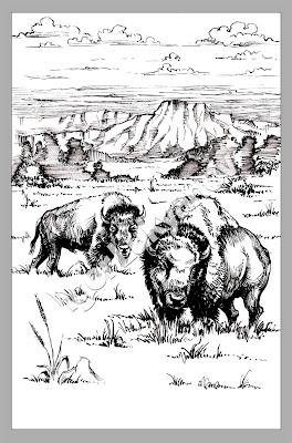 dessin de bisons (faune Amérique)