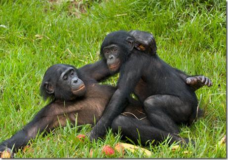 image Bonobo big bang theory