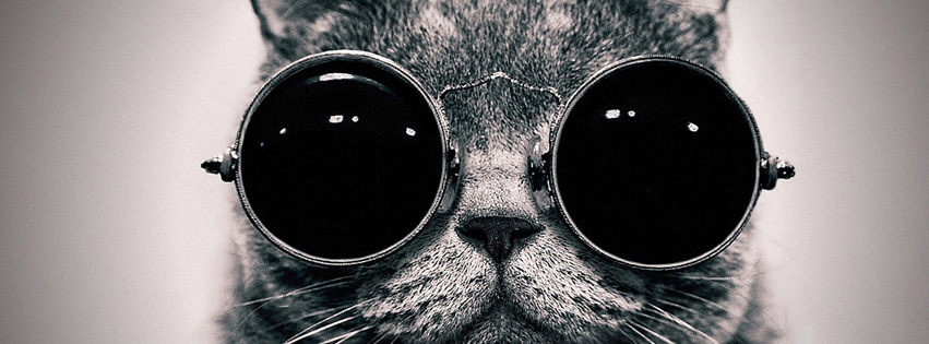 Black Cat Using Sun Glasses