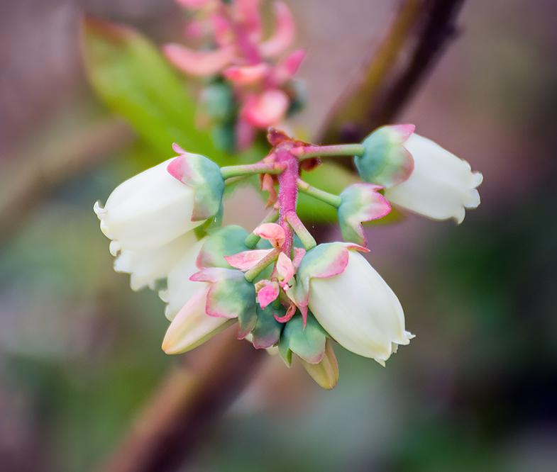 relationship between flowers and pollinators week