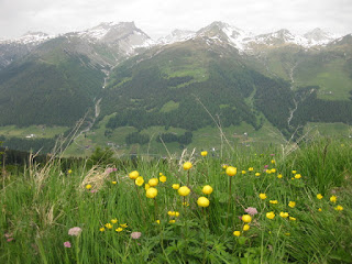 Yellow wildflowers with distant snow-capped peaks, viewed from the Rinerhorn near Davos, Switzerland