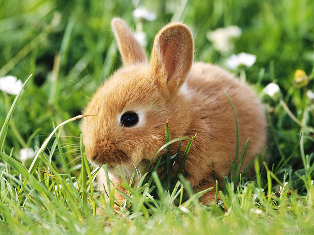 Bunny-Wallpapers-bunny-rabbits