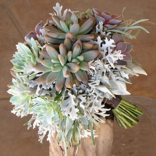 Terrarios de cactus y suclentas cactus y suculentas en - Cactus raros fotos ...