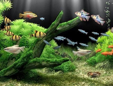 Cuidados generales de los peces mascotas en casa for Cuidado de peces