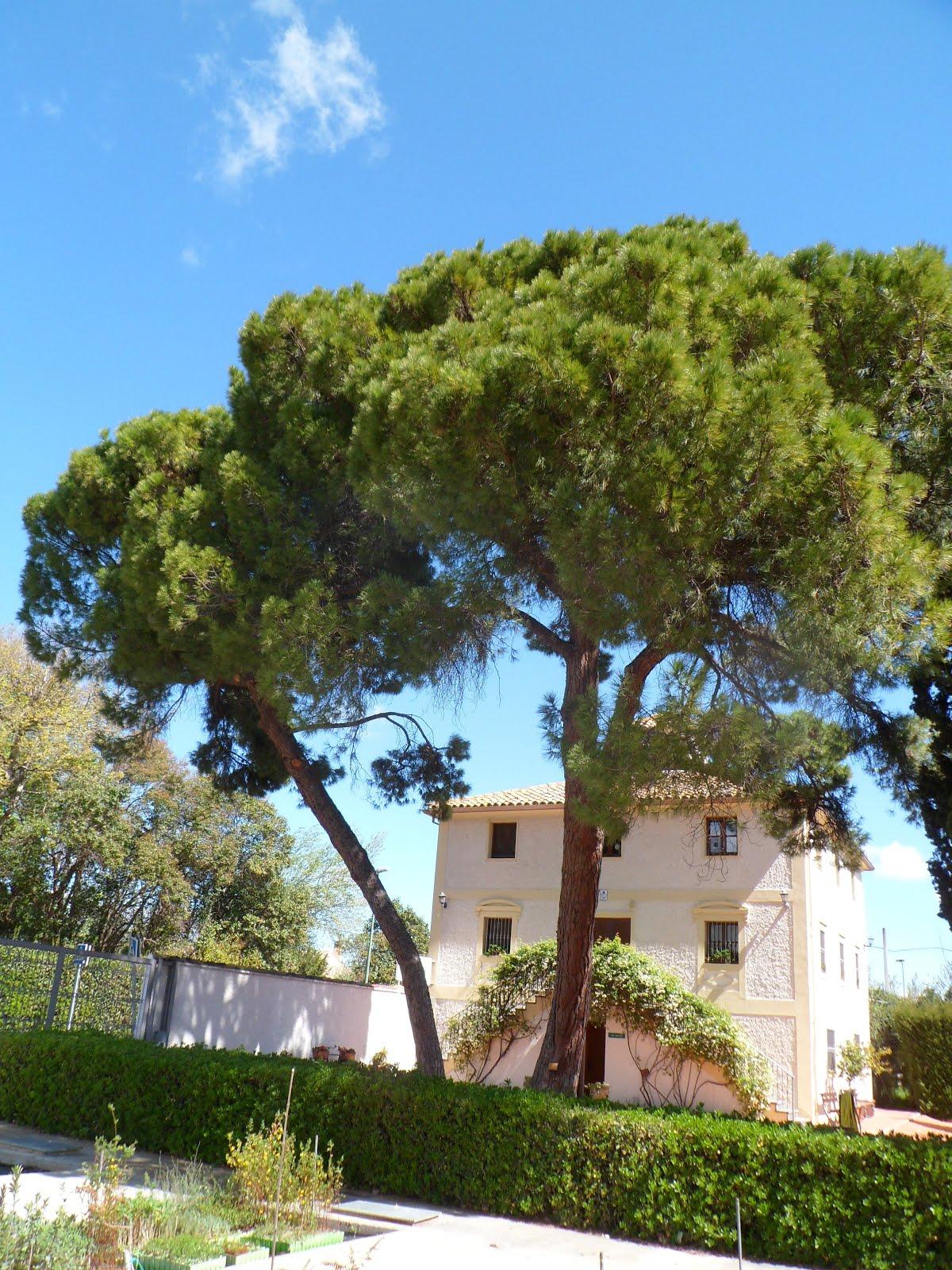 Escuela municipal de jardiner a el pinar nuevo curso for Escuela de jardineria