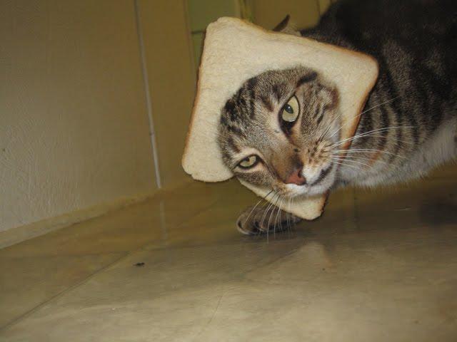 breaded cat, breading