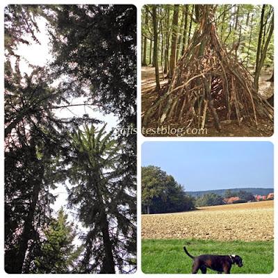 Wald, Wiesen und Felder