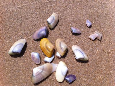 Oliva+Coquinas Ein Sonntag bei OLI BA BA am Strand von Oliva nördlich der Costa Blanca