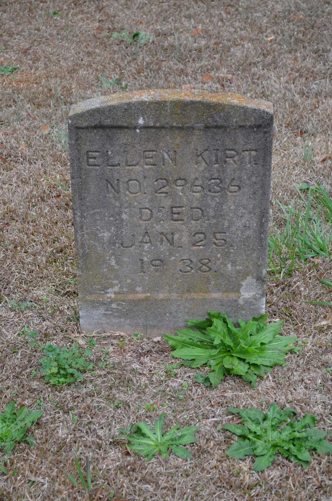 the numbers on these gravestones lead us to believe they were patients of the lunatic asylum
