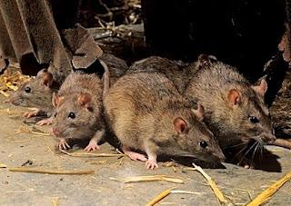 La battaglia tra i topi e le donnole (Fedro)