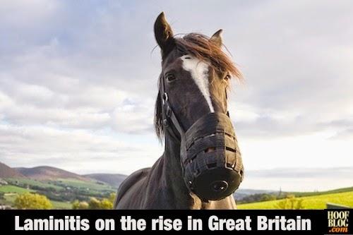 laminitis statistics in Great Britain