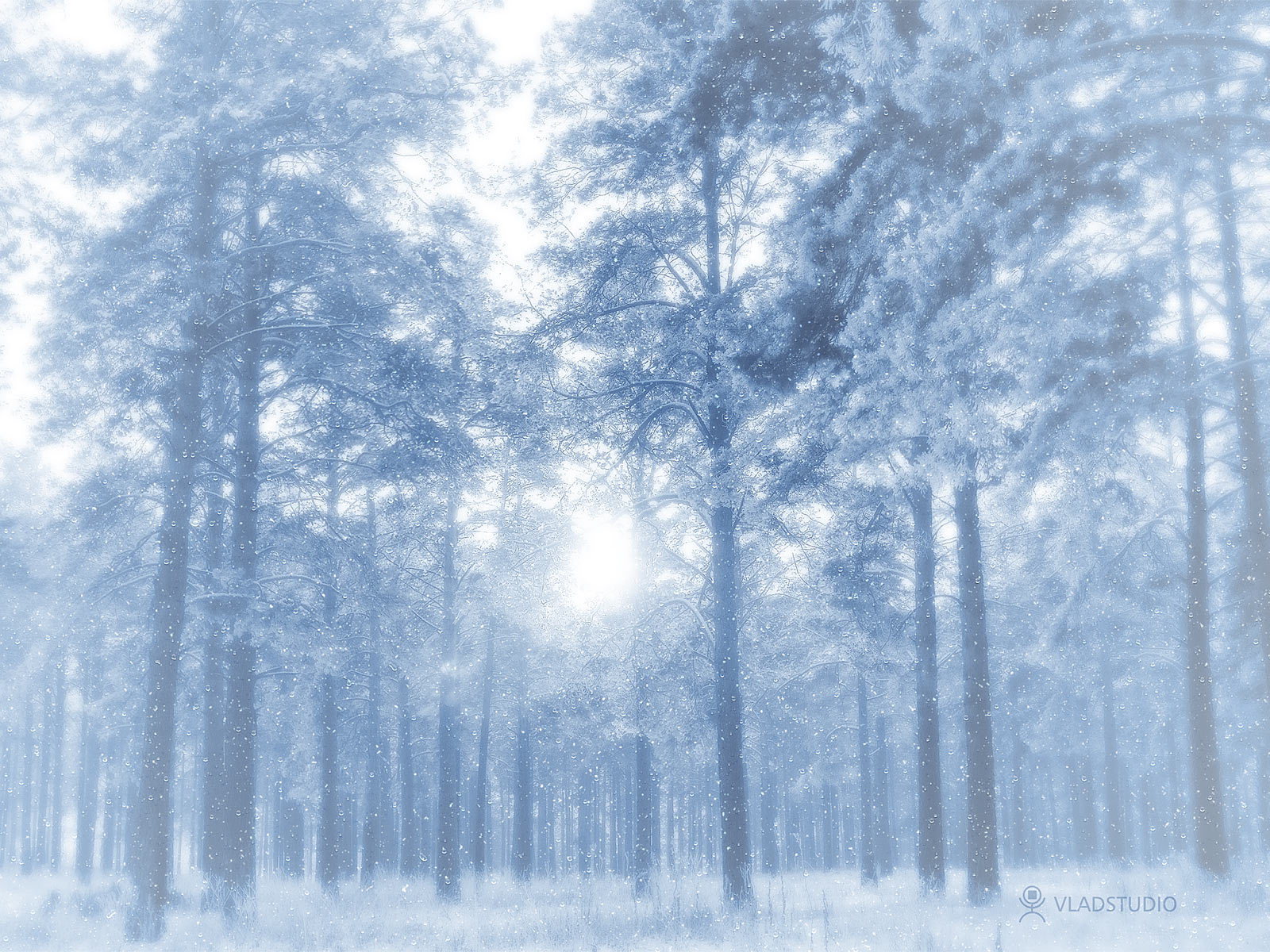 Winter Forest Desktop