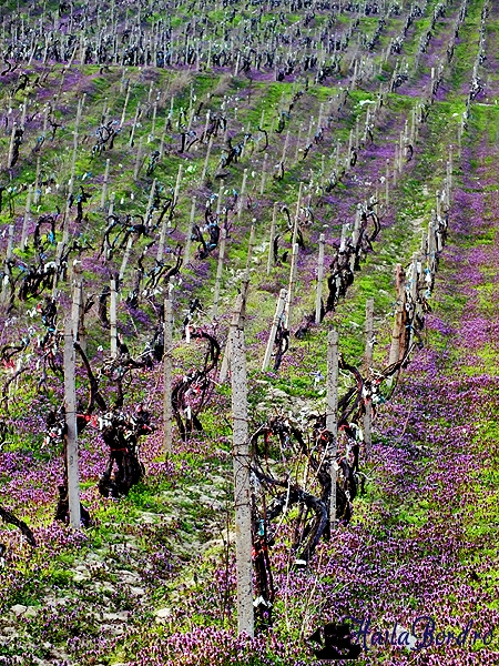 vie gramma wines