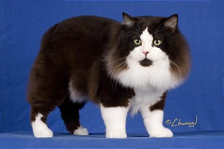 ... & Unik di Dunia: 10 Jenis Kucing Mahal yang Paling