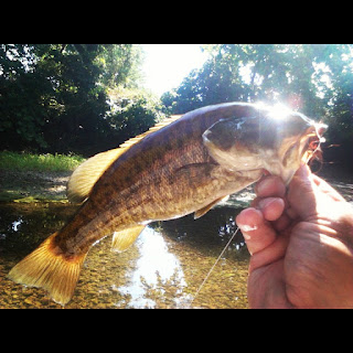 Buggin 39 out fishing the lies fly fishing for for Smallmouth bass fly fishing