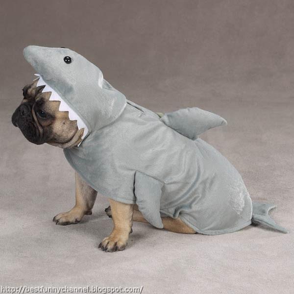 Dog shark.