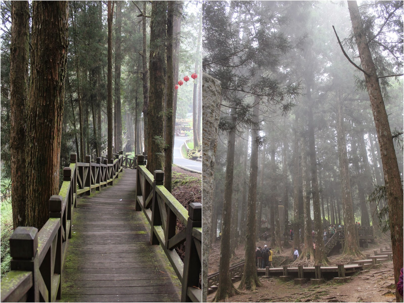 Food is our Religion: Taiwan - Part 2 (Alishan) + Smoking Panda ... After The Sunset