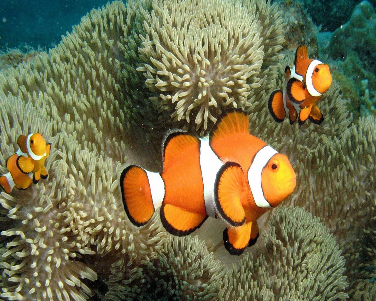 Ivanildosantos Gambar Ikan