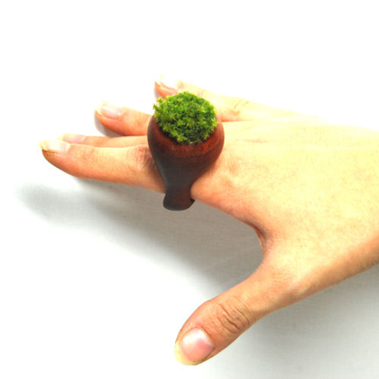 Fantásticos anillos de madera con plantas vivas
