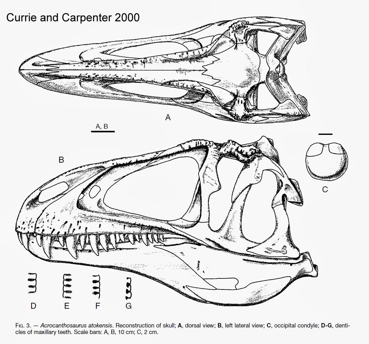 theropoda due acrocanthosaurus vs uno spinozilla