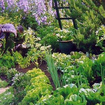 Il giardino sfumato paesaggio bello e buono - Gardenia pianta da giardino ...