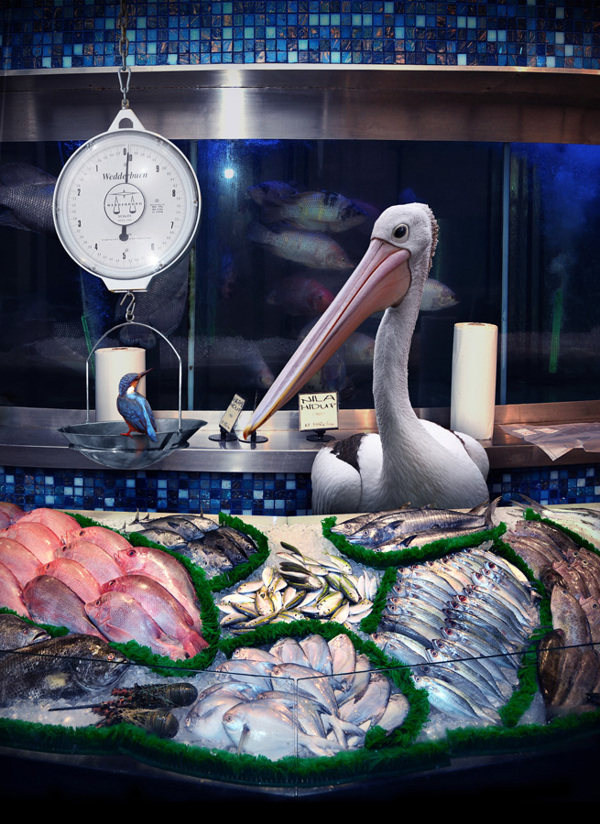 pelicano comprando pescado en supermercado