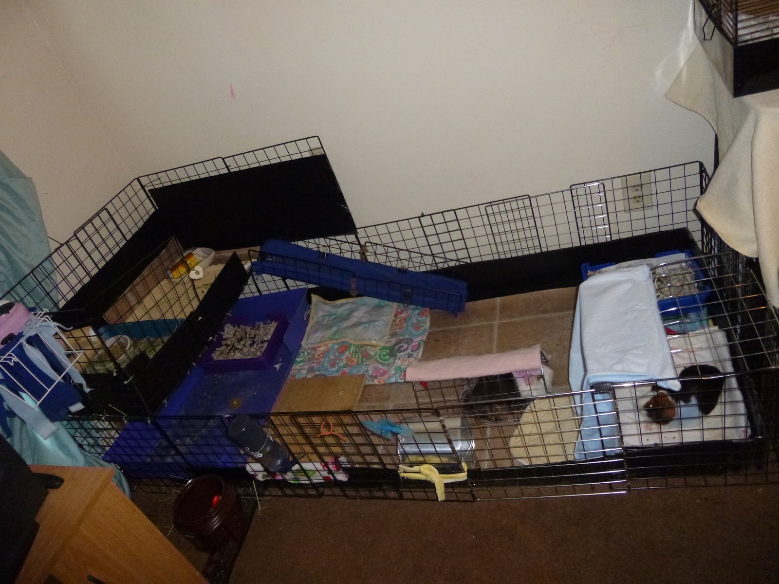 Pin chinchilla cages for sale on pinterest for Homemade guinea pig