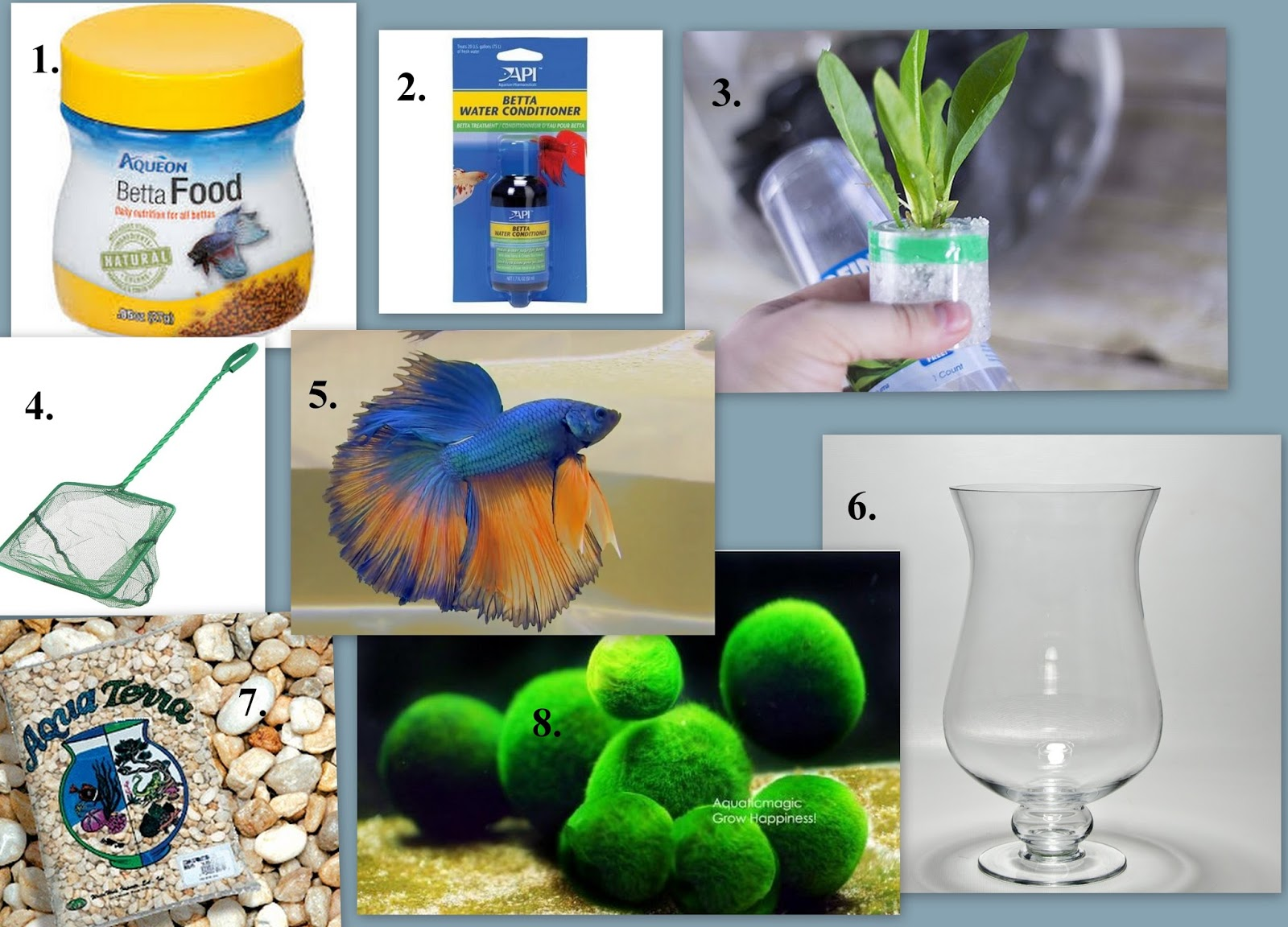 The perfect gift for an animal lover a betta fish bowl for Betta fish store