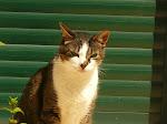 Bono- o meu gatinho