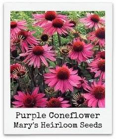 http://marysheirloomseeds.com/organic-wildflowers.html