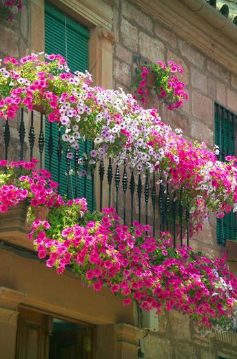 best plants for window boxes best flowers for window boxes. Black Bedroom Furniture Sets. Home Design Ideas