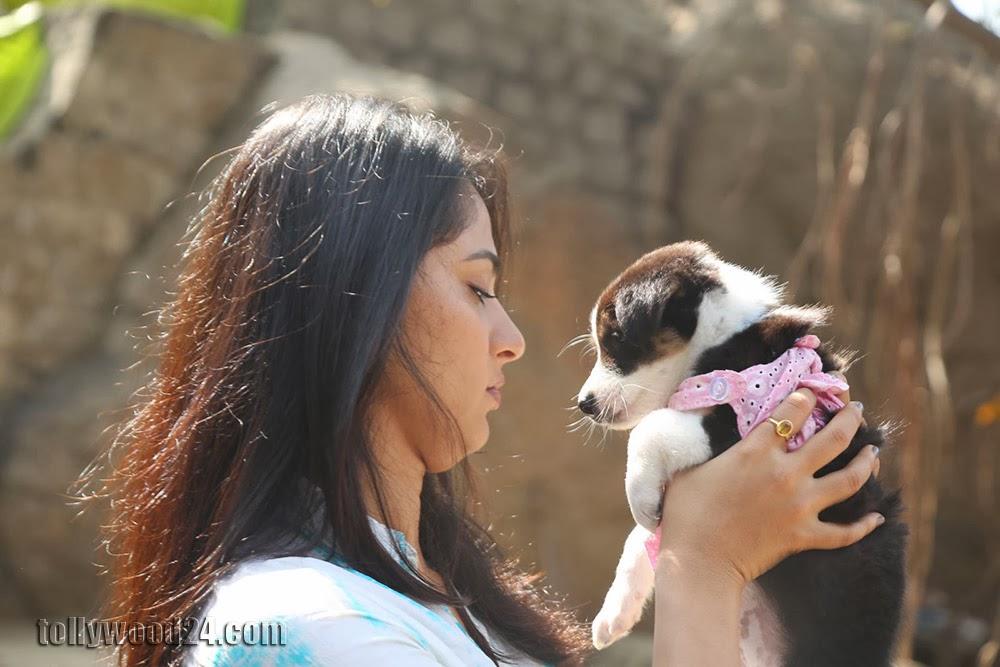 Anushka with Puppy at Blue Cross Pet Carnival Press meet-HQ-Photo-2