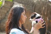 Anushka with Puppy at Blue Cross Pet Carnival Press meet-thumbnail-2