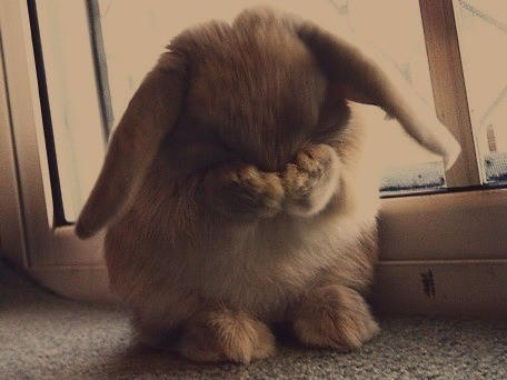 [Image: embarrassed-bunny-is-embarrassed-168839-456-342.jpg]