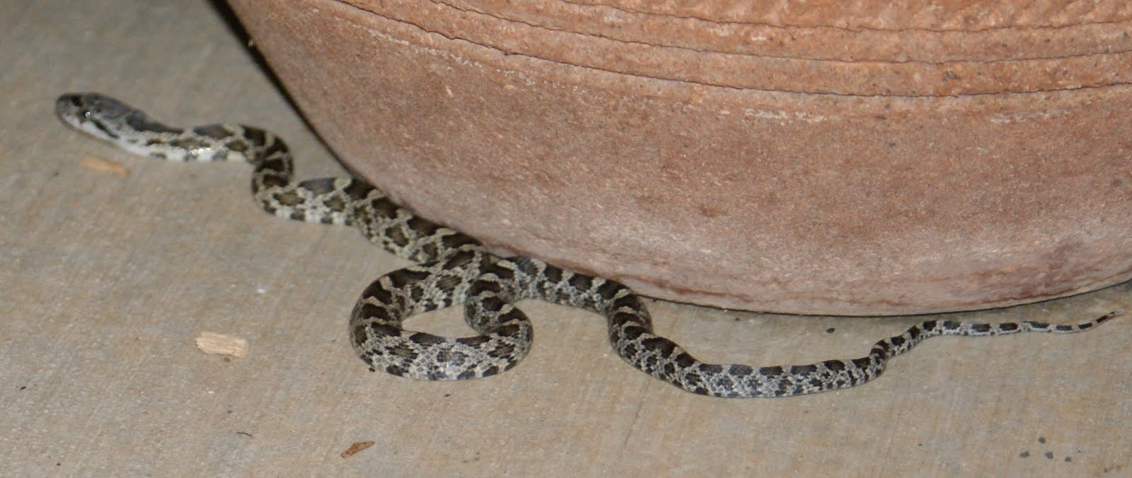 How to Deal With a Snake in the House: 14