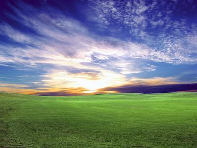 Hamparan rumput hijau di pagi hari
