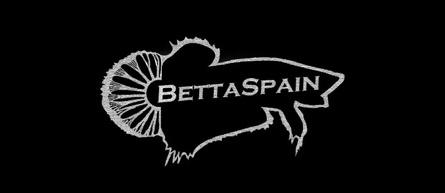 BettaSpain