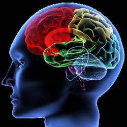 Penuhi 4 Makanan yang Diperlukan Otak http://blogbagi2.blogspot.com