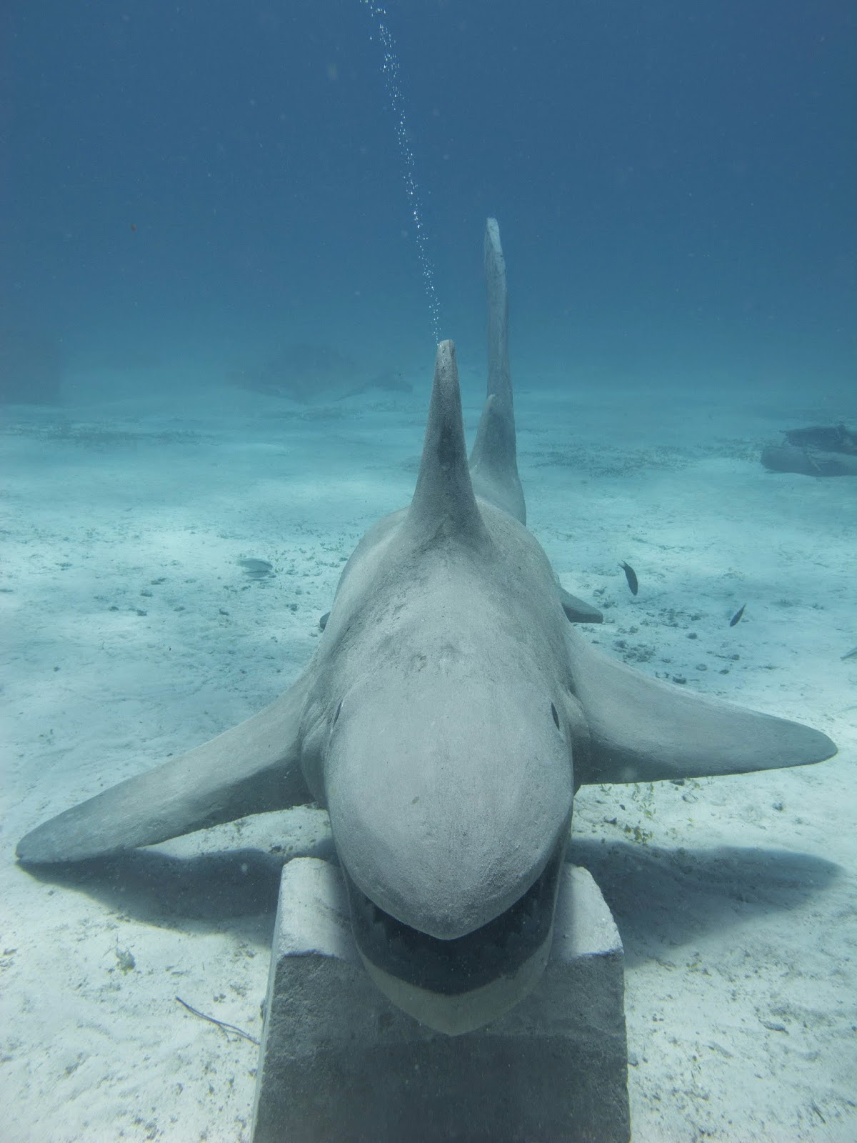 Artificial reef, our concrete shark!