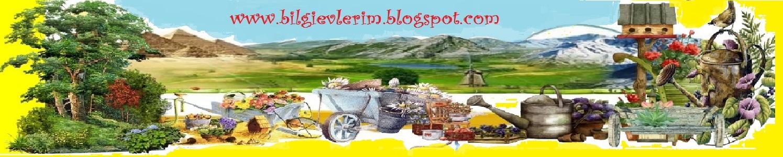 bilgievlerim.blogspot