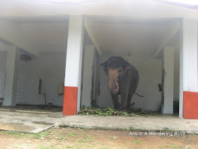 Elephant shed 1, Sringeri in Karnataka