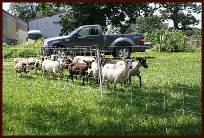 Mid-America Homesteading Conference: Premier1 fencing is key to