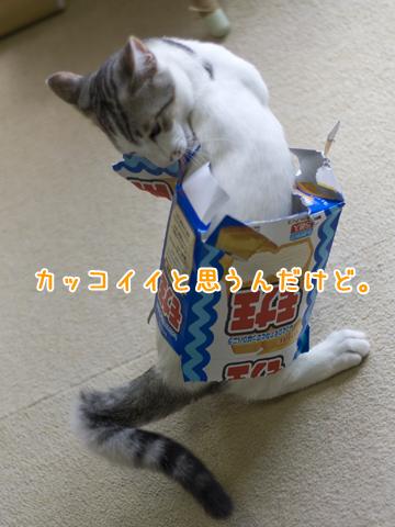 アイスの箱を被る子猫