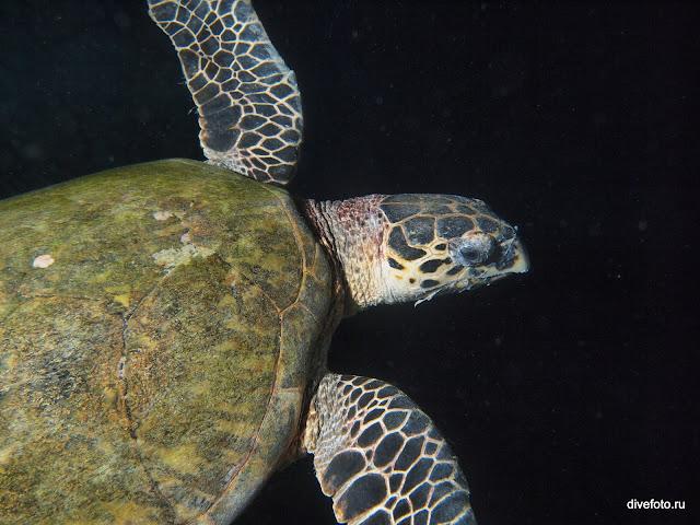 Морская черепаха ночью фото