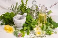 tanaman obat untuk penyakit insomnia