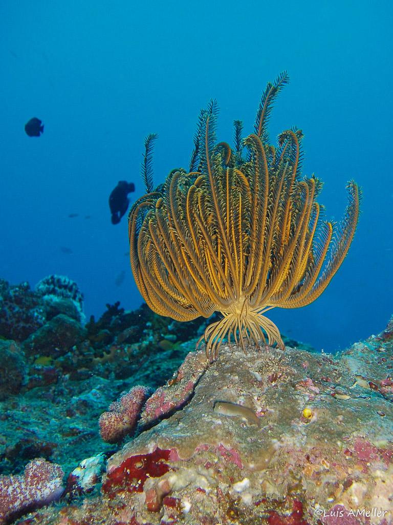 Luis AMeller - Andaman diving