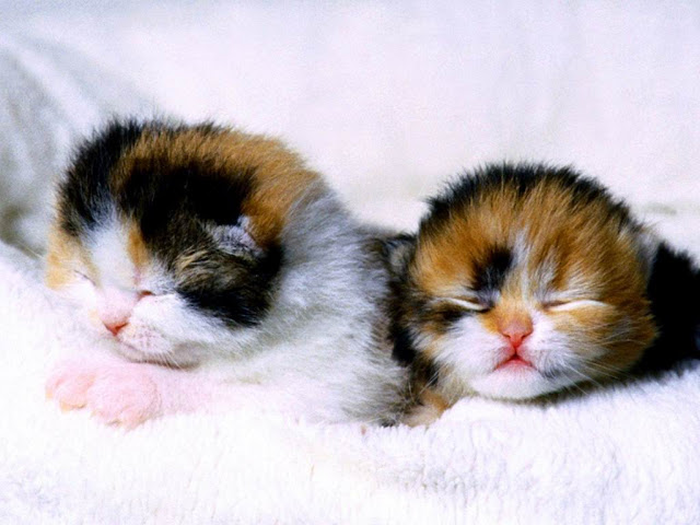 Two Cat Kittens 13